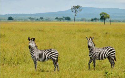 TANZANIA – co zobaczyć?
